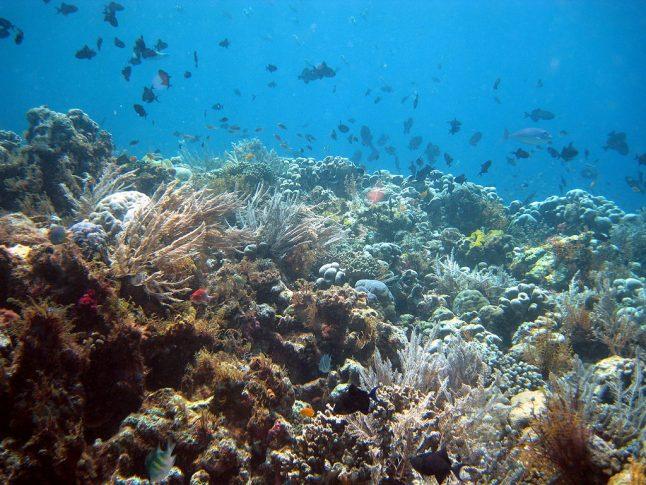 Korallenriff Sundainseln Kreuzworträtsel