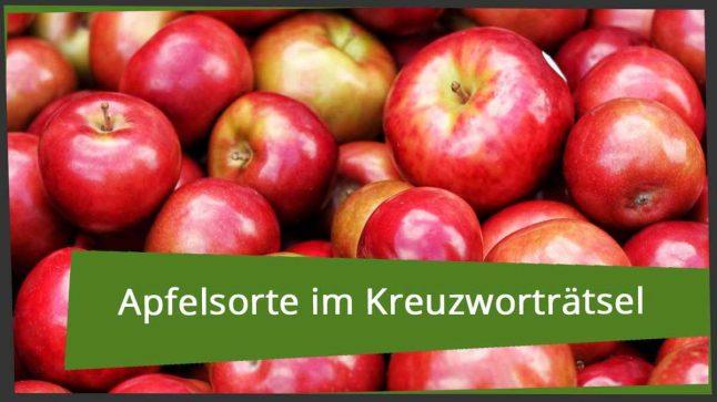 Zeolith Wörterbuch Deutsche Wörter