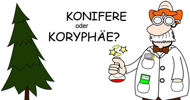 Eine typische Fremdwort-Verwechslung: Konifere oder Koryphäe?